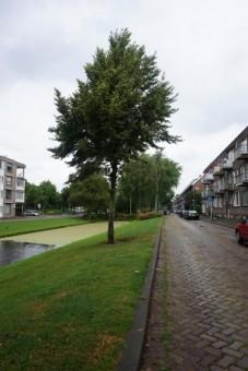 Urkersingel, Rotterdam